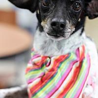 Adopt A Pet :: Katie - St. Bonifacius, MN