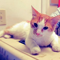 Adopt A Pet :: Ulysess - Trevose, PA