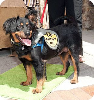 Collie Mix Dog for adoption in Marietta, Georgia - Tia Maria
