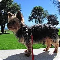 Adopt A Pet :: Joey - Toronto, ON