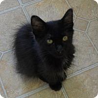 Adopt A Pet :: Gibbs - Mobile, AL