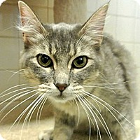 Adopt A Pet :: Glory - white settlment, TX