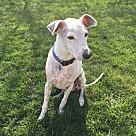 Adopt A Pet :: BonBon