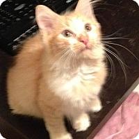 Adopt A Pet :: Thomas Jefferson - Pittstown, NJ