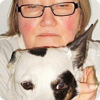 Adopt A Pet :: Buddy - Plain City, OH
