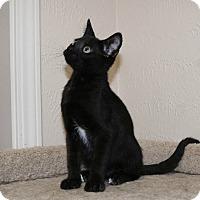 Adopt A Pet :: Ricky - Edmond, OK