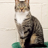 Adopt A Pet :: Ariel - Long Beach, NY