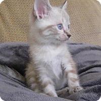 Adopt A Pet :: Tink - Orlando, FL