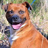 Adopt A Pet :: Court - Washington, GA