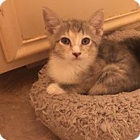 Adopt A Pet :: Lolli - Jacksonville, TX