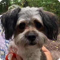 Adopt A Pet :: Sylvie - Orlando, FL
