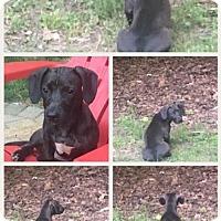 Adopt A Pet :: Maya - Tenafly, NJ