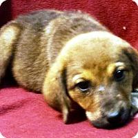 Adopt A Pet :: Kelly - Oswego, IL