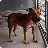 Adopt A Pet :: Macy - New Bern, NC