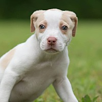 Adopt A Pet :: Chipper - Southbury, CT