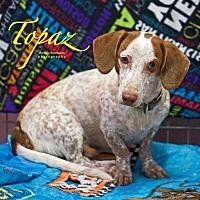 Adopt A Pet :: Topaz - San Antonio, TX