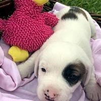 Adopt A Pet :: QUINN - ADOPTION PENDING! - Pennsville, NJ