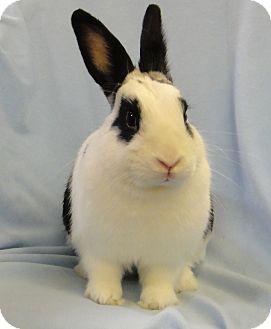 English Spot Mix for adoption in Los Angeles, California - Mozart