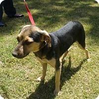 Adopt A Pet :: Ruger - Chandler, AZ