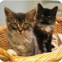 Adopt A Pet :: Jane and Marco - Portland, OR