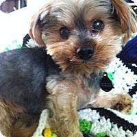 Adopt A Pet :: Ernie - Bemidji, MN