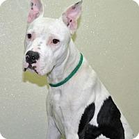 Adopt A Pet :: Junior - Port Washington, NY