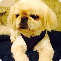 Adopt A Pet :: Piglet - Richmond, VA