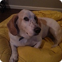 Adopt A Pet :: Holly - Northport, AL