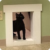 Adopt A Pet :: Orion - Medina, OH