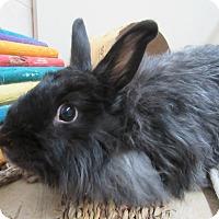 Adopt A Pet :: Cher - Newport, DE