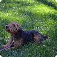 Adopt A Pet :: Scout - Courtesy Listing - Gig Harbor, WA