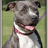 Adopt A Pet :: Rockz - North Fort Myers, FL