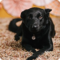 Adopt A Pet :: Benson - Portland, OR