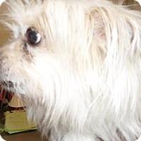Adopt A Pet :: Amos (Cocoa Center) - Cocoa, FL