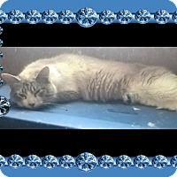 Adopt A Pet :: Lillian - london, ON