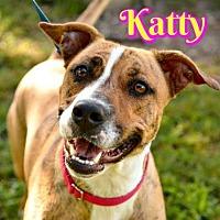 American Pit Bull Terrier Mix Dog for adoption in Sarasota, Florida - Katty
