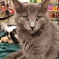 Adopt A Pet :: Scooter - Rosamond, CA