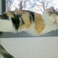 Adopt A Pet :: Gypsy - Greensboro, NC