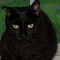 Adopt A Pet :: Gilbert - Salem, WV