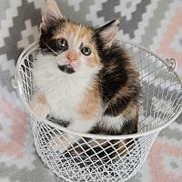 Adopt A Pet :: Patch - Muskegon, MI