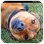 Photo 2 - Doberman Pinscher/Hound (Unknown Type) Mix Dog for adoption in Monroe, Georgia - Heidi