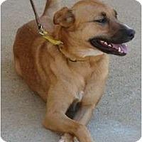 Adopt A Pet :: Casey - Afton, TN