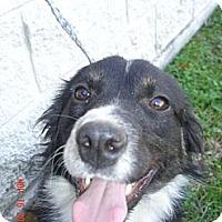 Adopt A Pet :: Spur - Stilwell, OK