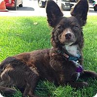 Adopt A Pet :: Batty - Los Angeles, CA