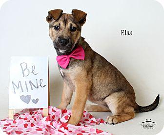 German Shepherd Dog Mix Puppy for adoption in Luling, Louisiana - Elsa
