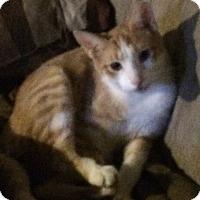 Adopt A Pet :: dorito - Muskegon, MI