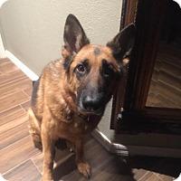 Adopt A Pet :: WONDER  (JW) - Tampa, FL