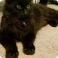 Adopt A Pet :: Mora - Wilmore, KY