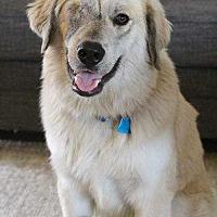 Adopt A Pet :: Norton - Sarasota, FL