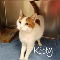 Adopt A Pet :: Kitty - Newton, IA